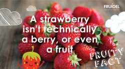 Strawberry Fruity Fact