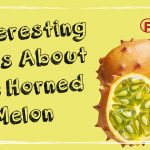 5 Interesting Facts About The Horned Melon